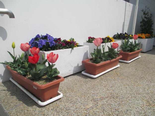 プランターの花達